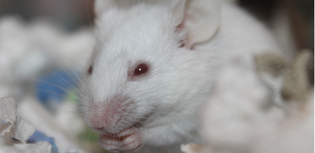 rodent-1024x500